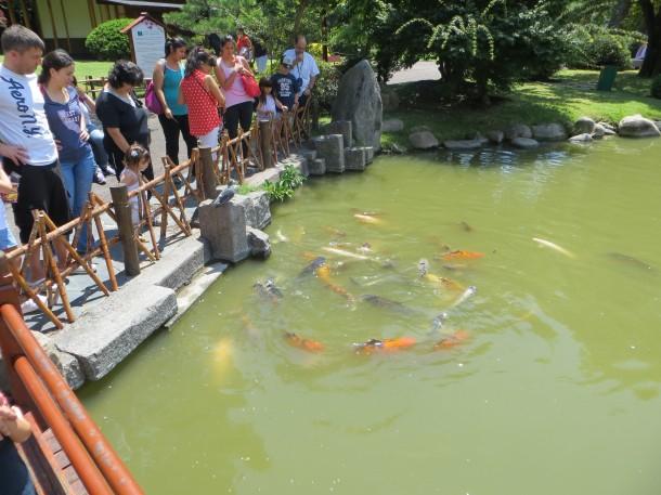 Jardin Japones Carp